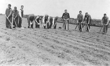 Hand sowing of sugar beet in 1936 at Clonakilty Agricultural College